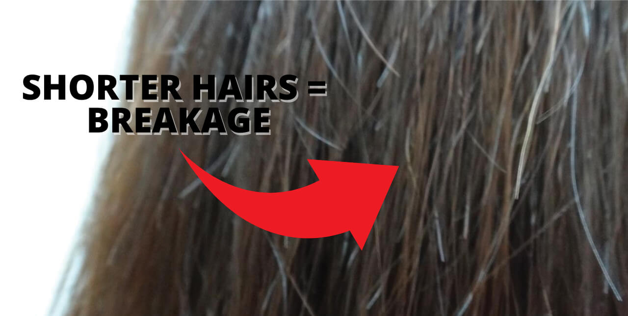 Shorter hairs are an indication of hair breakage.