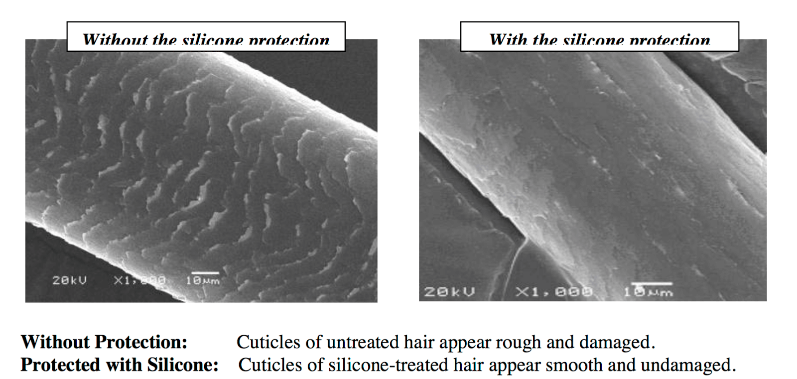 Hair shaft with and without silicone hair care products.